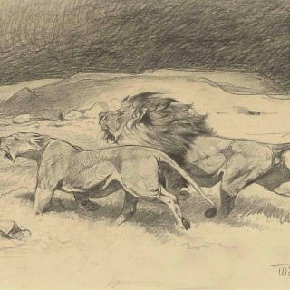 Wilhelm Kuhnert Lion and Lioness